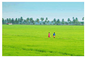 fields of kerala