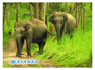 wayanad forests